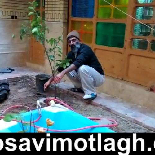 ویدئوی استاد موسوی مطلق با عنوان درختکاری از مصادیق باقیات و الصالحات